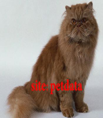 فروش گربه پرشین کت | خرید گربه پرشین کت | فروش بچه گربه پرشین کت