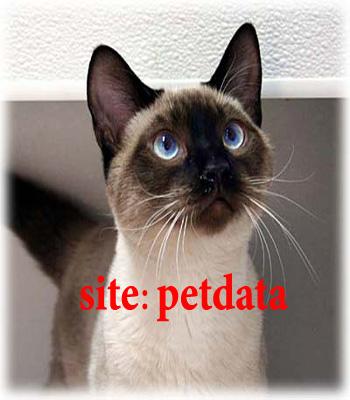 فروش گربه سیامی | خرید گربه سیامی | فروش بچه گربه سیامی