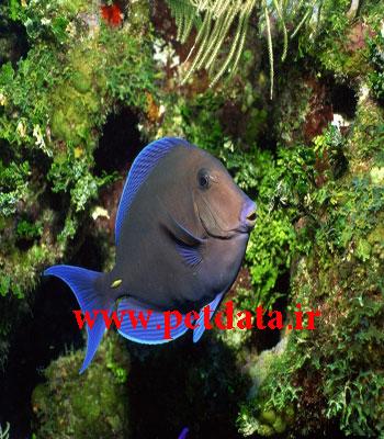 فروش ماهی تزئینی | فروش اکواریوم | لوازم اکواریوم