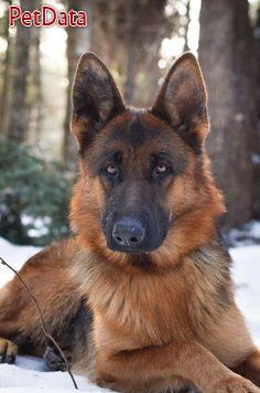 شركت سرزمين حيوانات خانگي ايرانيان به شماره ثبت408447