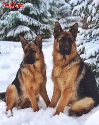 فروش بيش از 100 قلاده سگ در يک مجموعه