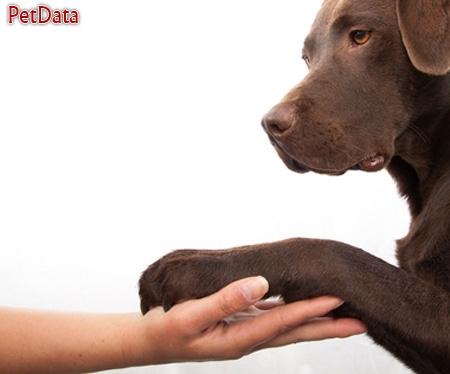 تربيت سگ درمنزل توسط خانم عارف