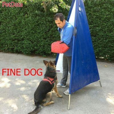 اينستاگرام مربي تربيت سگ رضا کبود هن - 09123711504