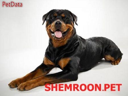 فروش سگ مورد علاقه شما راهنماي خريد سگ از ما