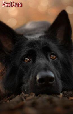 اموزش مربي سگ