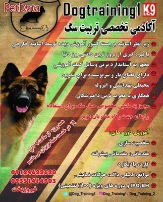 مربي تربيت سگ فيروزبخت 09124622620