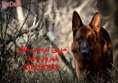 پانسيون سگ تربيت سگ  09124622620