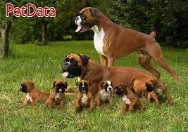 فروش سگ باکسر سگ شکار