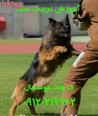 مربي تربيت سگ در تهران فرهاد خوشحال 09120219962
