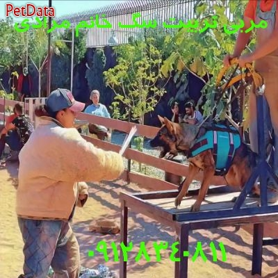 مربي خانم تربيت سگ خانگي  در تهران  مونا کاوند 09125710949