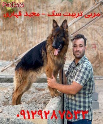 فروش سگ تربيت شده مجيد قهاري  09129287533
