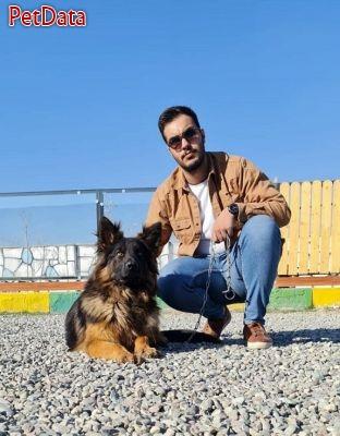سگ ژرمن شپرد شولاين محبوب ترين سگ جهان