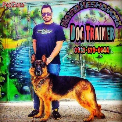 فروش سگ ژرمن شپرد  توله سگ و سگ ژرمن گارد
