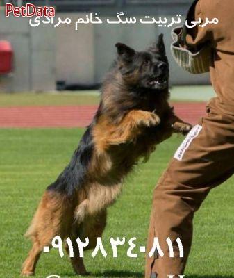مربي تربيت سگ خانگي در پرديس
