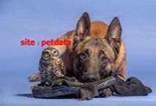 فروش سگ خرید سگ تربیت سگ