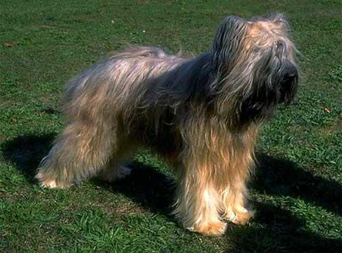 <a title='نژاد سگ بریارد' href='http://www.google.com/search?q=site%3Awww.petdata.ir+نژاد سگ بریارد' ><strong style='color:blue'>نژاد سگ بریارد</strong></a>