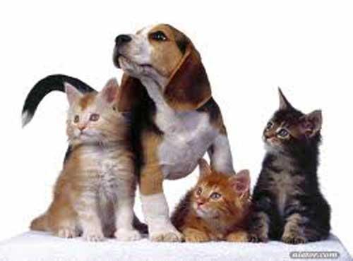 <a title='فروشگاه حیوانات خانگی' href='http://www.google.com/search?q=site%3Awww.petdata.ir+فروشگاه حیوانات خانگی' ><strong style='color:blue'>فروشگاه حیوانات خانگی</strong></a>