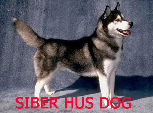 <a title='نژاد سگ هاسکی' href='http://www.google.com/search?q=site%3Awww.petdata.ir+نژاد سگ هاسکی' ><strong style='color:blue'>نژاد سگ هاسکی</strong></a>