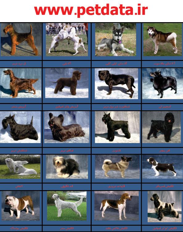 عکس سگ,عکس سگ سرابی,عکس سگ ایرانی,عکس سگ وحشی,عکس توله سگ