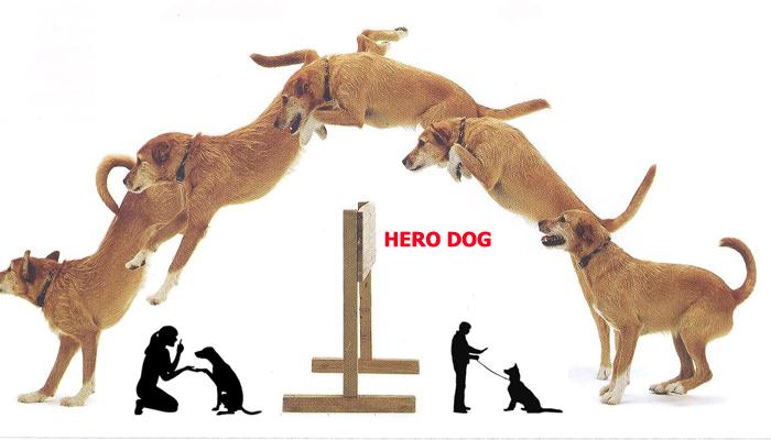 آموزش تربیت سگ <a rel=nofollow style='color:blue' title='هروداگ'  href='http://www.google.com/search?q=site%3Awww.petdata.ir/full_ads.php+هروداگ' > <strong>هروداگ</strong></a>